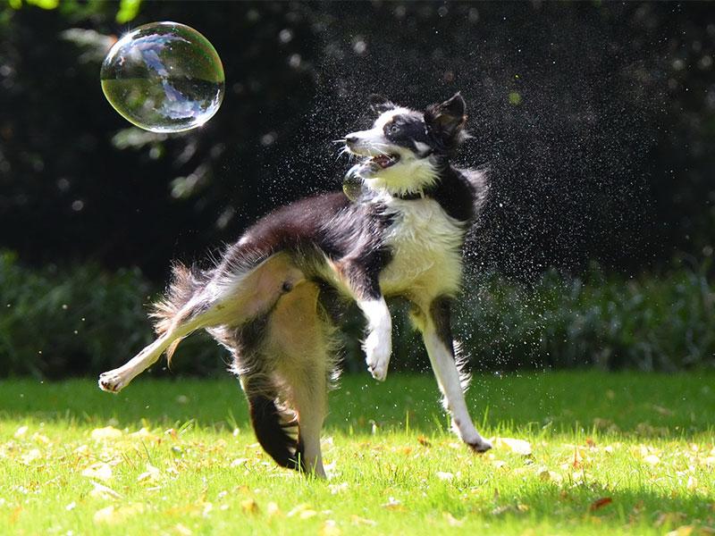 játék a kutyával