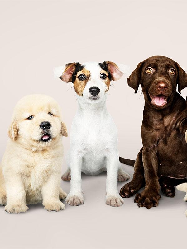 csoportos kutya oktatás